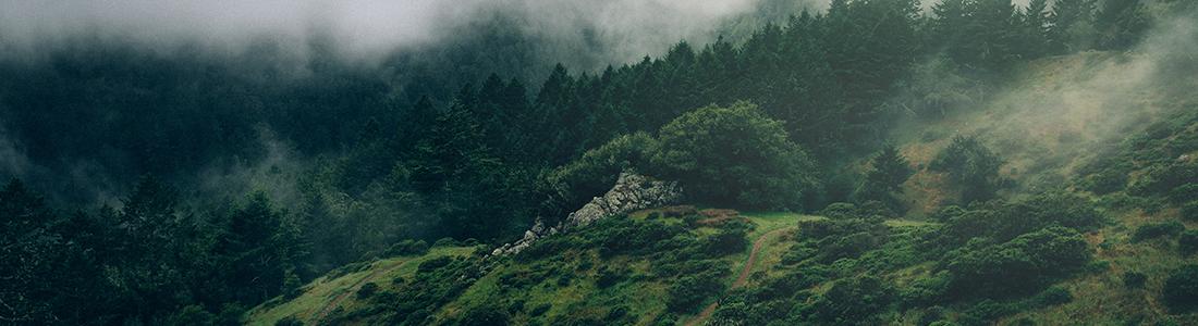 Landskapvy. En kulle och granskog i dimma.